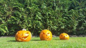 Halloween Kürbis schnitzen 4