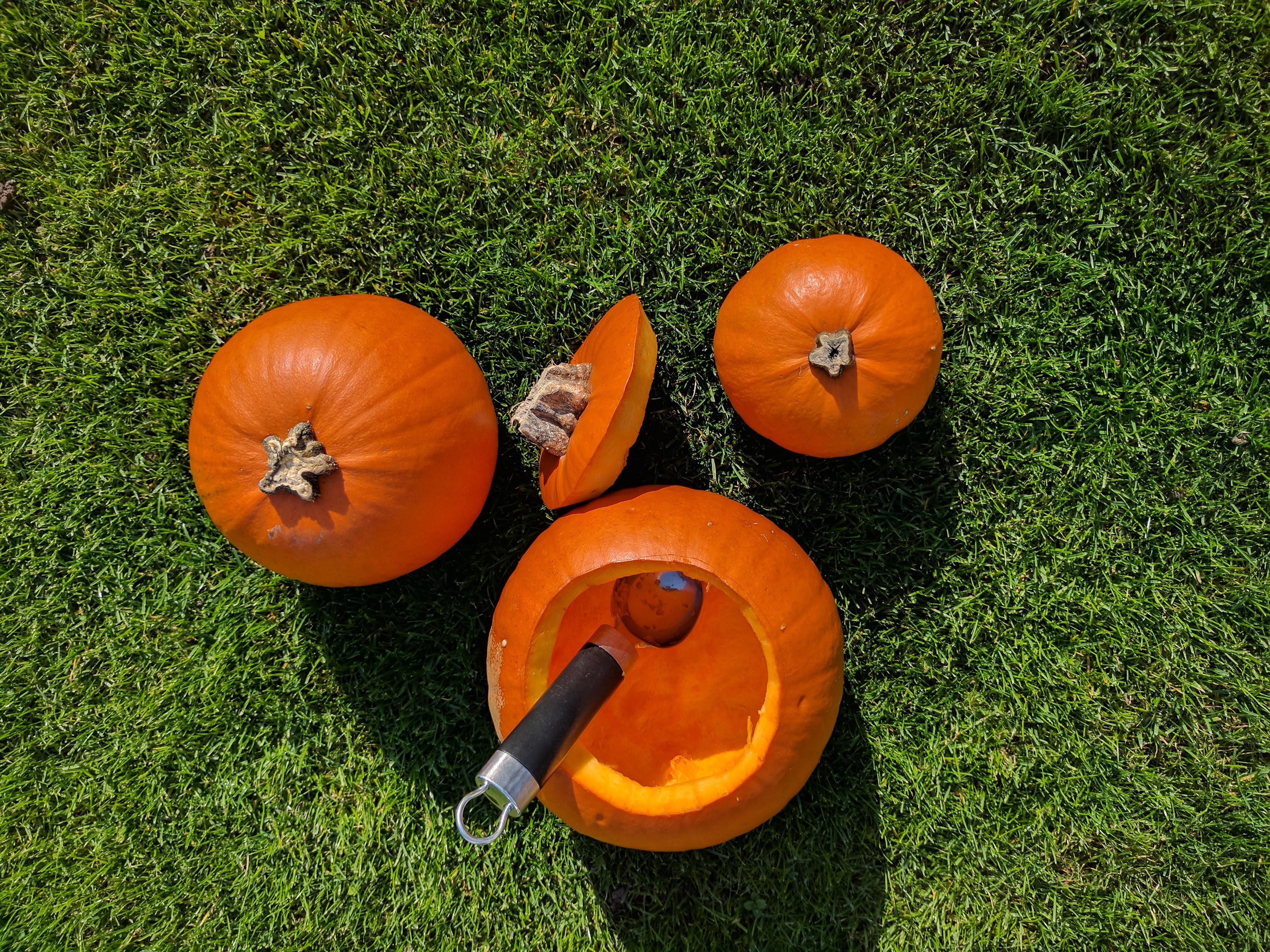 Halloween Kürbis schnitzen 7